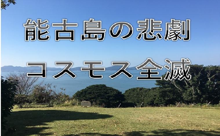 能古島アイランドパークのコスモス全滅でした【2017年悲報】